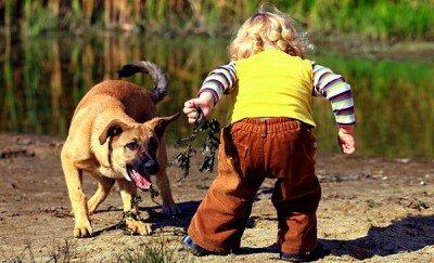ребенок боится собаки 5